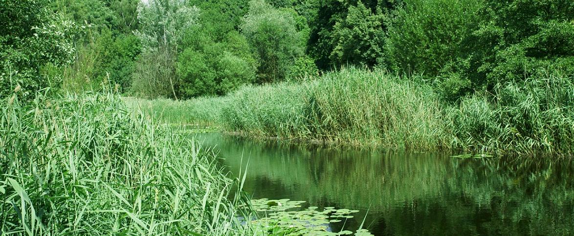 Teich in der Hasenheide